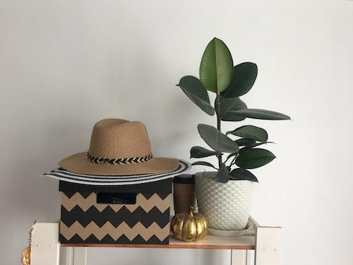 帽子と観葉植物